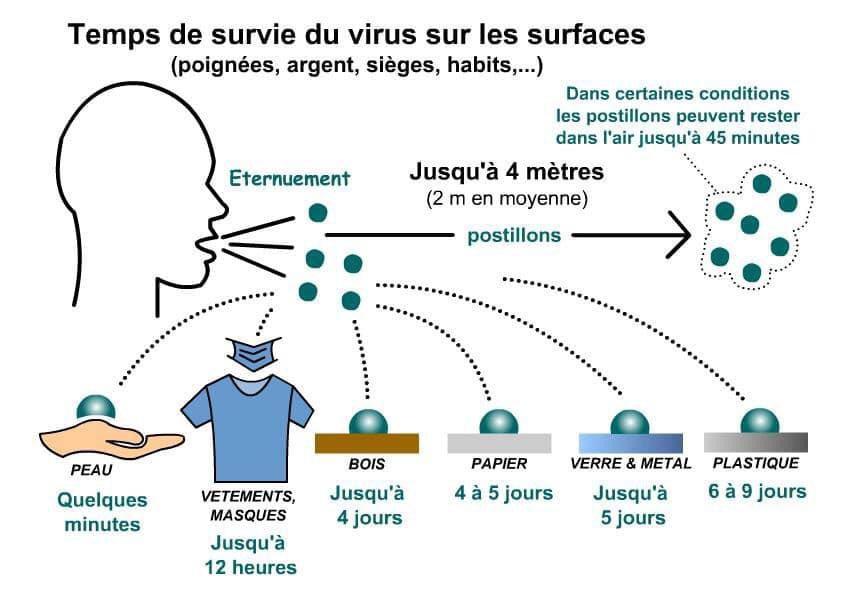 Temps de survie du coronavirus covid-19 sur les surfaces