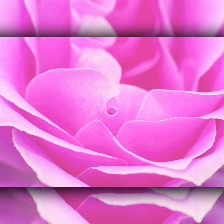 PINK color - ROSE