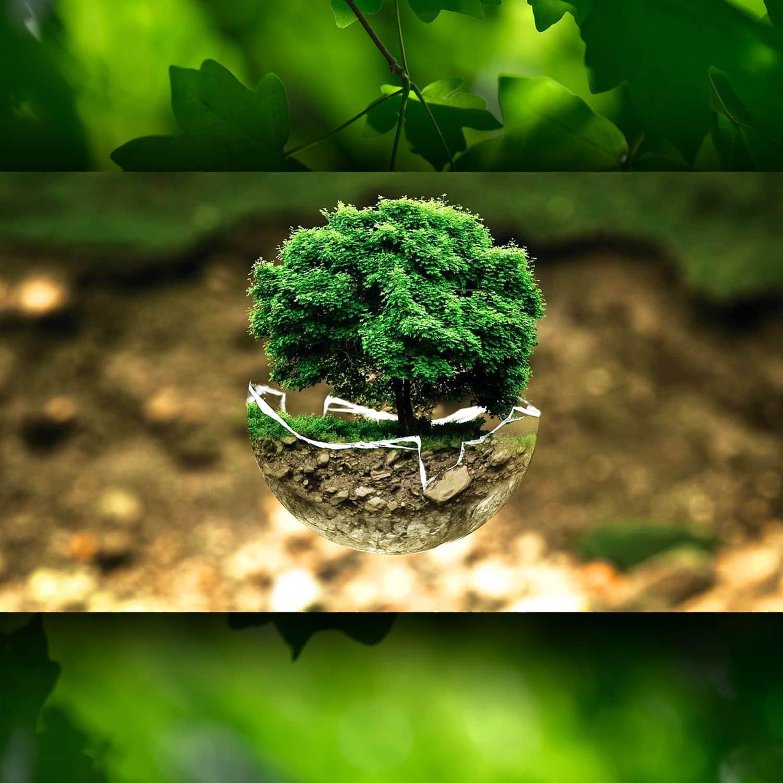 Tutela ambientale 2021